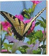 Sunny Tiger Swallowtail  Wood Print