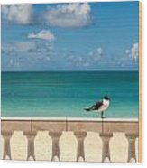 Sunny Tropical Seashore With Gull Wood Print