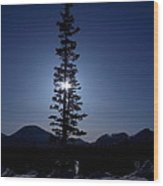 Sunny Winter Pine Wood Print
