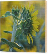 Sunny With Texture Wood Print