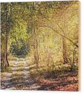 Sunray In The Autumn Forest Wood Print