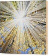 Sunrays In The Forest Wood Print