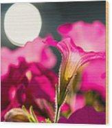 Sunrise 1 - Featured 3 Wood Print
