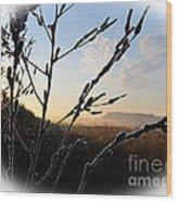 Sunrise 365 2 Wood Print