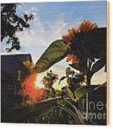 Sunrise 365 29 Wood Print