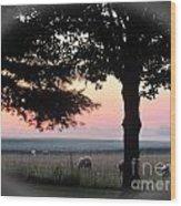 Sunrise 365 35 Wood Print