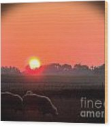 Sunrise 365 9 Wood Print