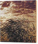 Sunrise And Lacy  Tree Wood Print