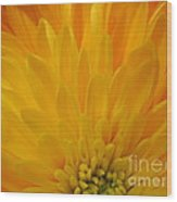 Sunrise Dahlia Abstract Wood Print