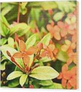 Sunrise Flower Wood Print