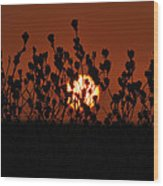 Sunrise In South Texas Wood Print