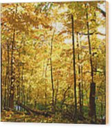 Sunrise In The Forest Wood Print by James Hammen