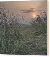Sunrise Landscape In Summer Looking Through Wild Thistles And Gr Wood Print