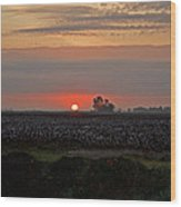 Sunrise On The Cotton Field Wood Print