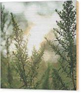 Sunrise Over Greenery Wood Print