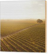 Sunrise Over The Vineyard Wood Print