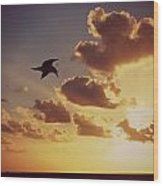 Sunrise Seagull Wood Print