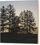 Sunrise Shines Through The Pines Wood Print