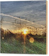 Sunrise Through Grass Wood Print by Tim Buisman
