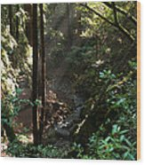 Sun's Rays Wood Print