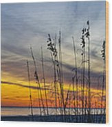 Sunset And Grasses Wood Print