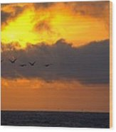 Sunset And Pelicans Wood Print