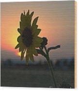 Sunset And Sunflower Wood Print