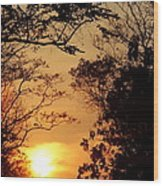 Sunset At Jungle Wood Print