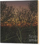 Sunset At The Presidio   Wood Print