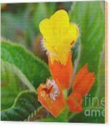 Sunset Bells Flower Wood Print