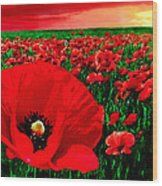 Sunset California Poppy Preserve Wood Print