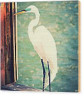 Sunset Dock Visitor Wood Print
