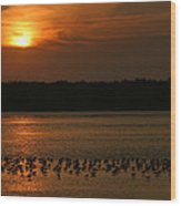 Sunset Flock Wood Print