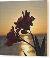 Sunset Flower 2 Wood Print