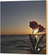 Sunset Flower 3 Wood Print