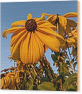 Sunset Flowers Wood Print