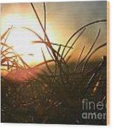 Sunset Grass 1 Wood Print