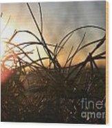 Sunset Grass 2 Wood Print