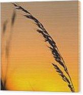 Sunset Grass Wood Print