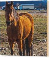 Sunset Bay Horse Heber Valley Utah Wood Print