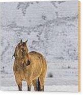 Sunset Horse In Montana Wood Print