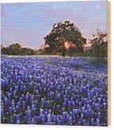 Sunset In Bluebonnet Field Wood Print