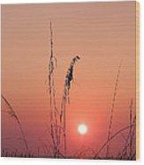 Sunset In Tall Grass Wood Print