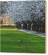Sunset In The Almond Orchard Wood Print