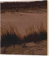 Sunset In The Dunes Wood Print