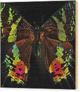Sunset Moth Wood Print