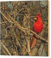 Sunset On A Norhern Cardinal Wood Print