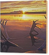Sunset On Caribou Antlers In Whitefish Lake Wood Print
