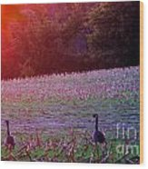 Sunset On Mallards Wood Print