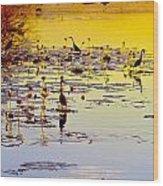 Sunset On Parry's Lagoon Wood Print